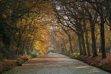 Herfst in Bergen aan Zee van