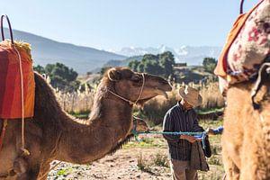 Kamelreiten von Malou Franken
