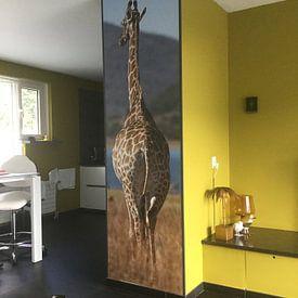 Kundenfoto: Giraffe am Meer von De Afrika Specialist, auf nahtlose tapete