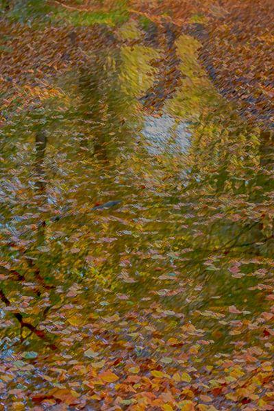 herfstkleuren van Corrie Ruijer