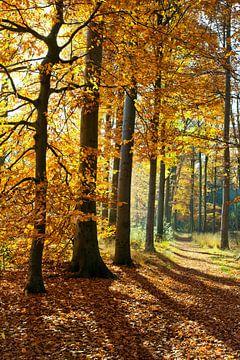 Herfst in het bos van Andy Van Tilborg