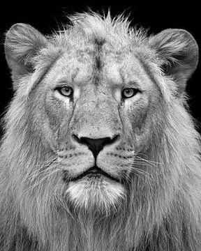 König der Löwen von Patrick van Bakkum