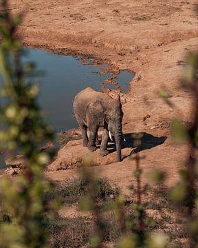 Thirsty African Elephant van Ian Schepers