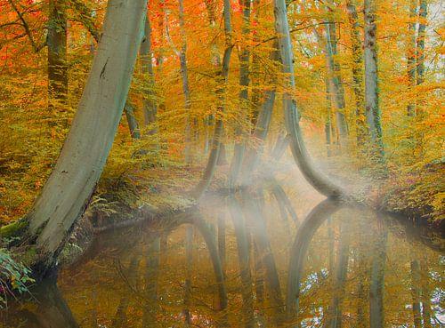 Herfst in Twickel van