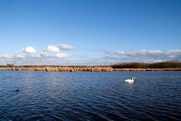 Zwaan op het water von Laura Aiola