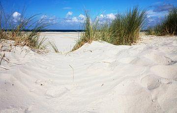 Strand en duinen op Terschelling von