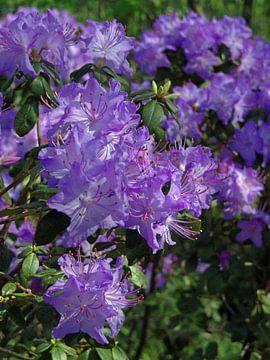 Bloemen van Roy Strik