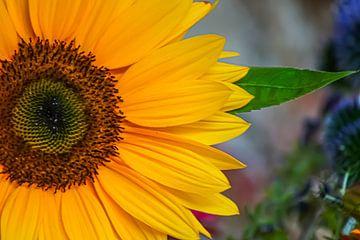 Sonnenblume von Niek Traas