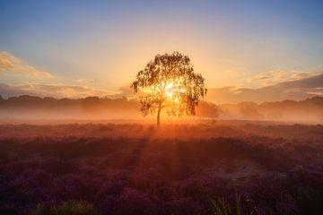 Heidefeld mit Messe am Morgen von Björn van den Berg