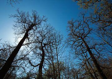 Bos van BVpix