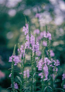 Blumen Teil 196 von Tania Perneel