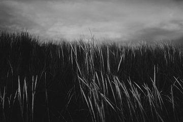 Stabiles schwarz-weißes Detailfoto der Dünen auf Ameland von Holly Klein Oonk