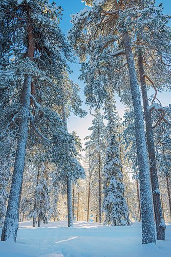 Winterlandschap met late middagzon, Finland