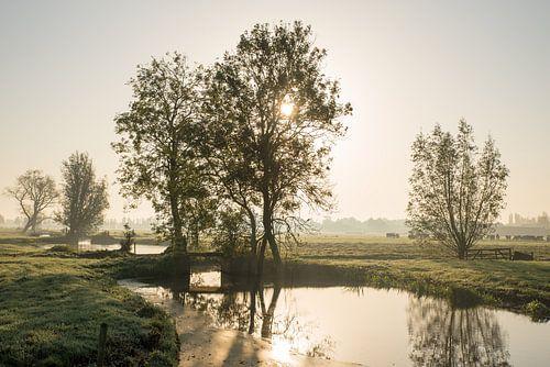 Zonsopkomst in nevelig pitoresk polderlandschap