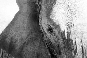 Wijze blik van een olifant van