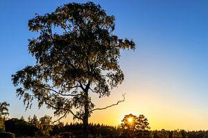 Sonnenbeschienener Solitärbaum bei Sonnenuntergang. von Henk Van Nunen Fotografie