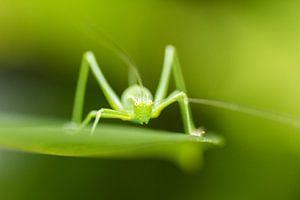 Groene dimensie