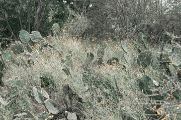 Kakteen in einem Nationalpark von By SK Photography