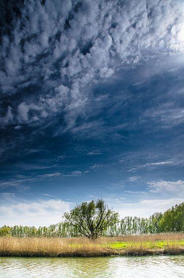 Eenzame boom in de Rhoonse Grienden - Lente van Ricardo Bouman | Fotografie