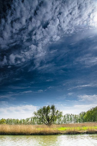 Eenzame boom in de Rhoonse Grienden - Lente van Ricardo Bouman   Fotografie