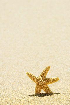 LP 70485291 Zeester staand in zand