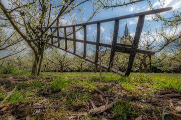 Ladder in fruitboomgaard van Moetwil en van Dijk - Fotografie