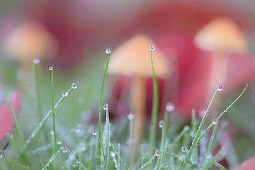 paddenstoel met dauw van Kim de Been
