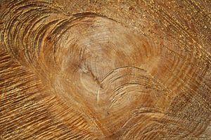 Jaarringen boom van Martin van den Berg Mandy Steehouwer