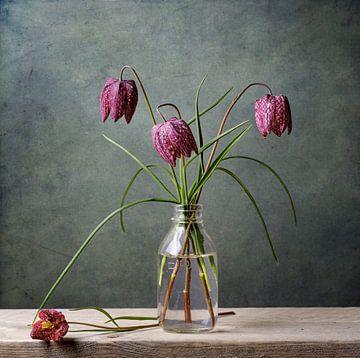 Stilleben mit Wildkiebitzblüten von Petra Cremers