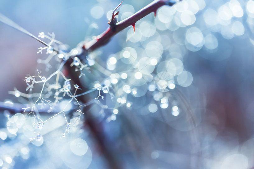 Winter Bokeh van Cho Tang