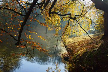 Beuk in herfstkleuren sur Michel van Kooten