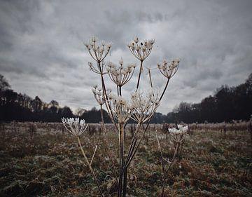 Pflanzung in einer Wiese mit Frostschicht von Marie-Claire Aling