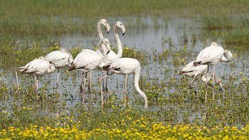 Flamingo's von Els Van den Kerckhove-Verhoeven