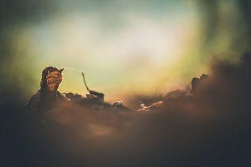 Herfstblaadje van Gerrit Veldman