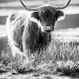 Portret van een Schotse hooglander van Evelien Oerlemans