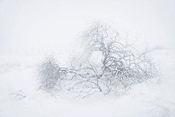 Berijpte wilg in sneeuwlandschap van Michel Lucas