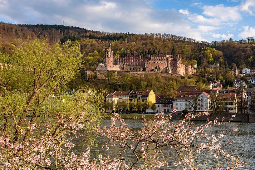 Frühling in Heidelberg von Michael Valjak