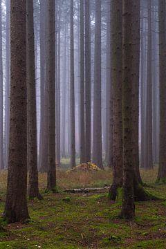 In het mistige bos van Denis Feiner