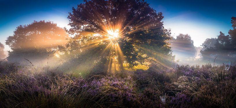 Zonnestralen op een heideveld  van Martijn van Steenbergen