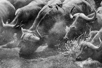 Durstiger Büffel von Anja Brouwer Fotografie