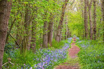 bospad in wildrijk van Ed Dorrestein