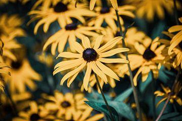 Gelbe Blumen von Jayzon Photo