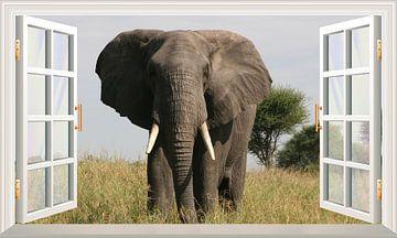 Ein Elefant schaut in das offene Fenster von Bert Hooijer