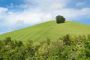 Einsamer Baum auf dem Hügel von Aukelien Minnema