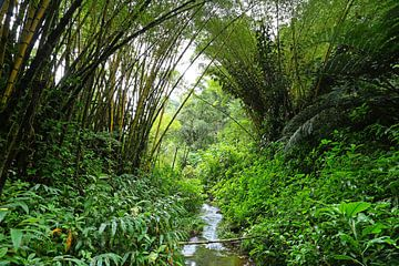 Bamboe van Antwan Janssen