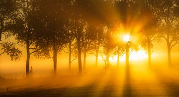 Die Groninger Landschaft an einem schönen nebligen Morgen im Mai mit schönem Licht von Bas Meelker