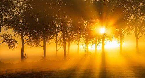 Het Groninger Landschap op een mooie mistige ochtend in mei met prachtig licht