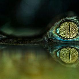 Krokodillen: drijven in het water van Rob Smit