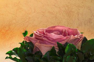 rosea rosa sine aqua van Michael Nägele