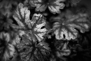 Pflanzen abstrahiert